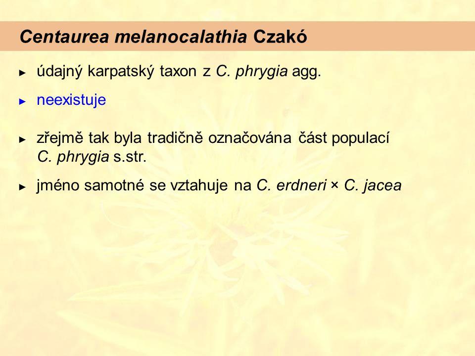 Centaurea melanocalathia Czakó
