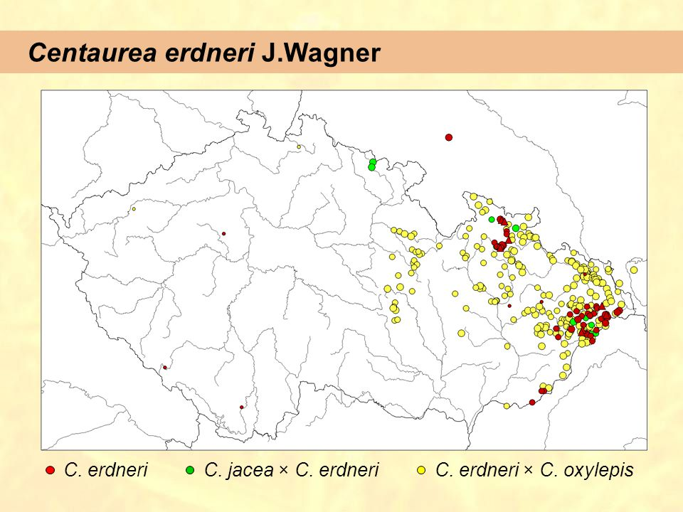 Centaurea erdneri J.Wagner