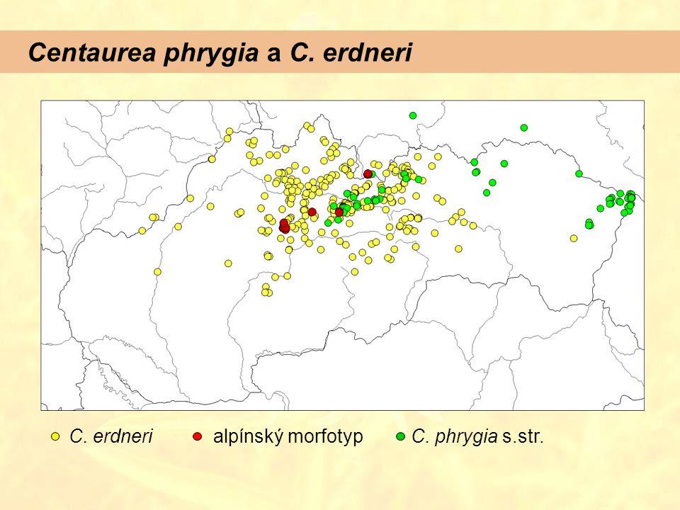 Centaurea phrygia a C. erdneri