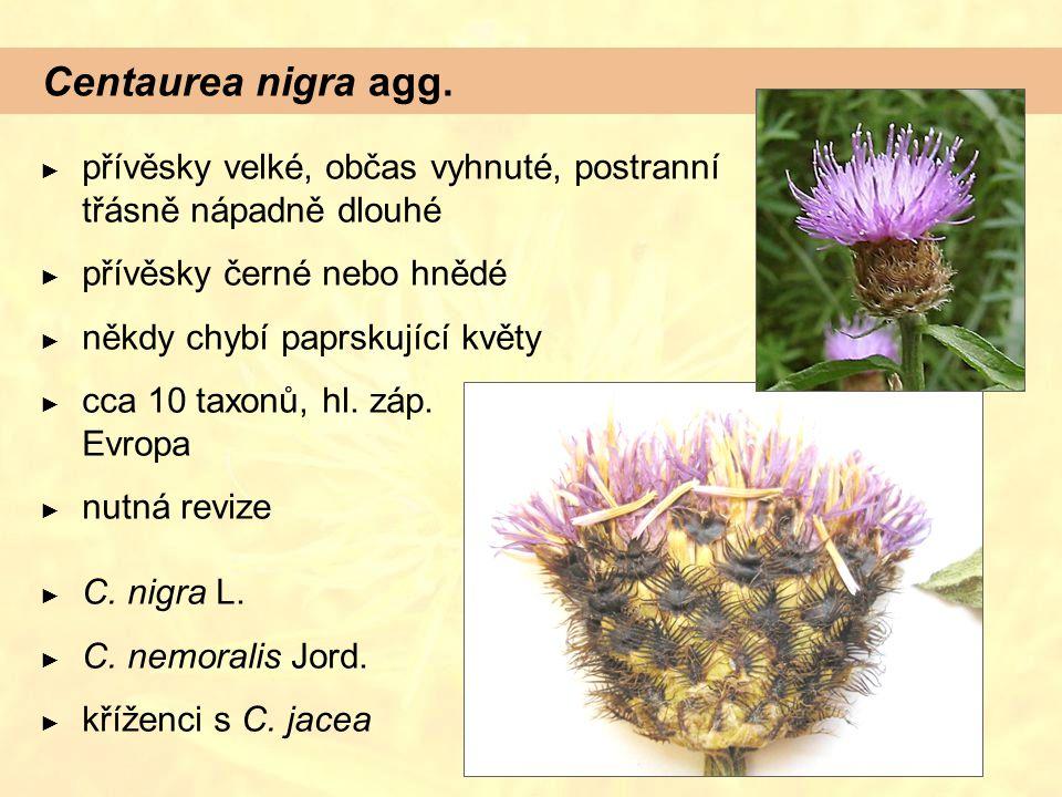 Centaurea nigra agg. přívěsky velké, občas vyhnuté, postranní