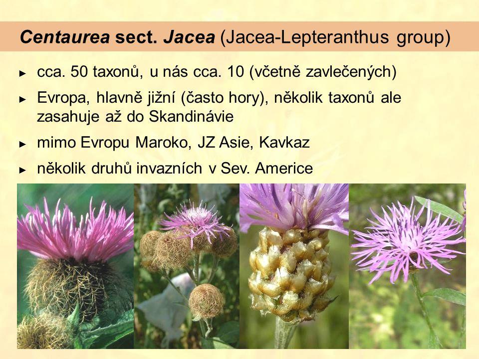 Centaurea sect. Jacea (Jacea-Lepteranthus group)