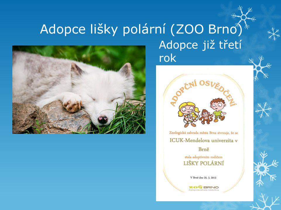 Adopce lišky polární (ZOO Brno)