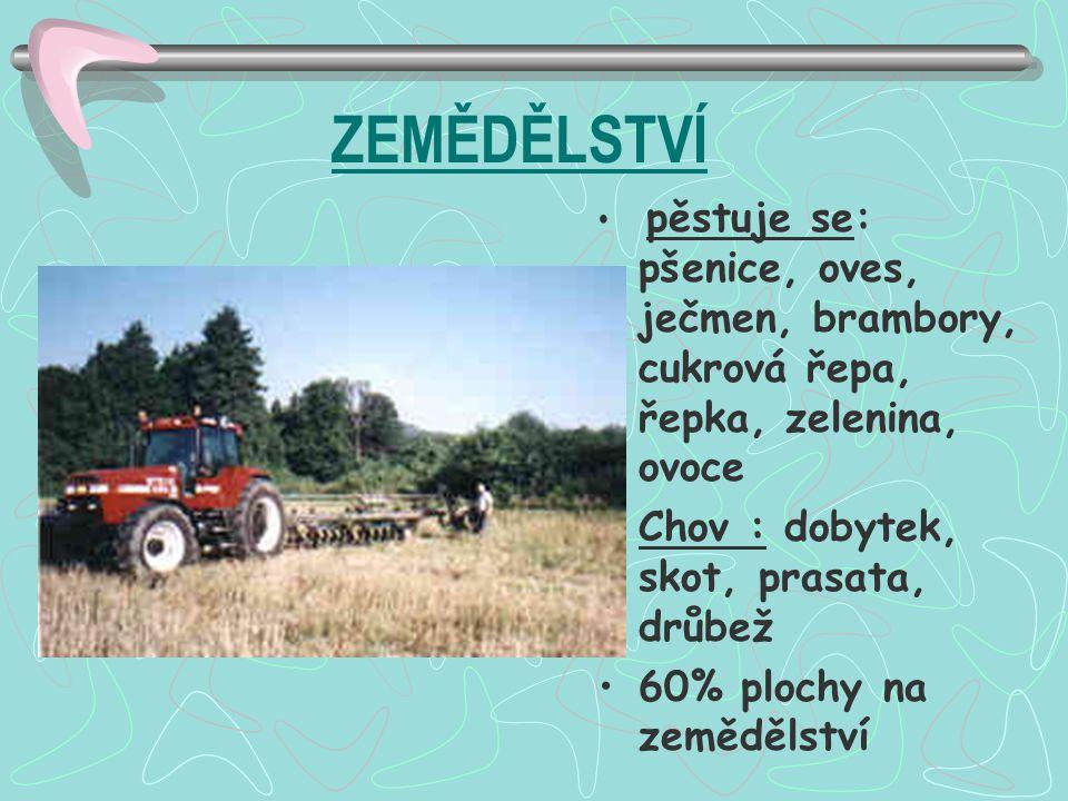 ZEMĚDĚLSTVÍ Chov : dobytek, skot, prasata, drůbež