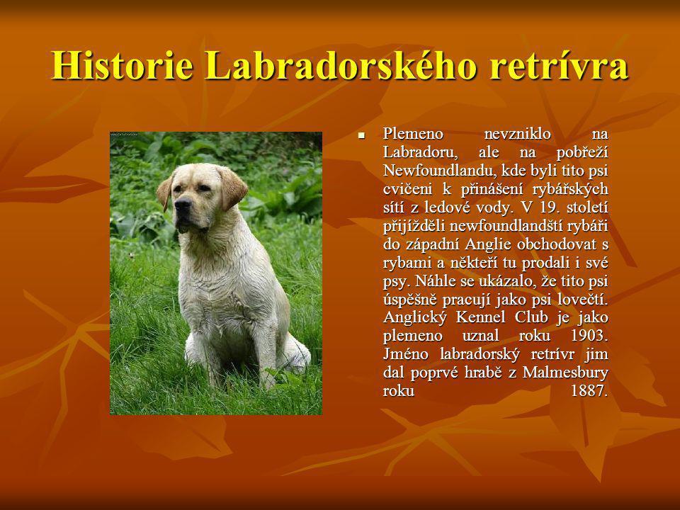 Historie Labradorského retrívra