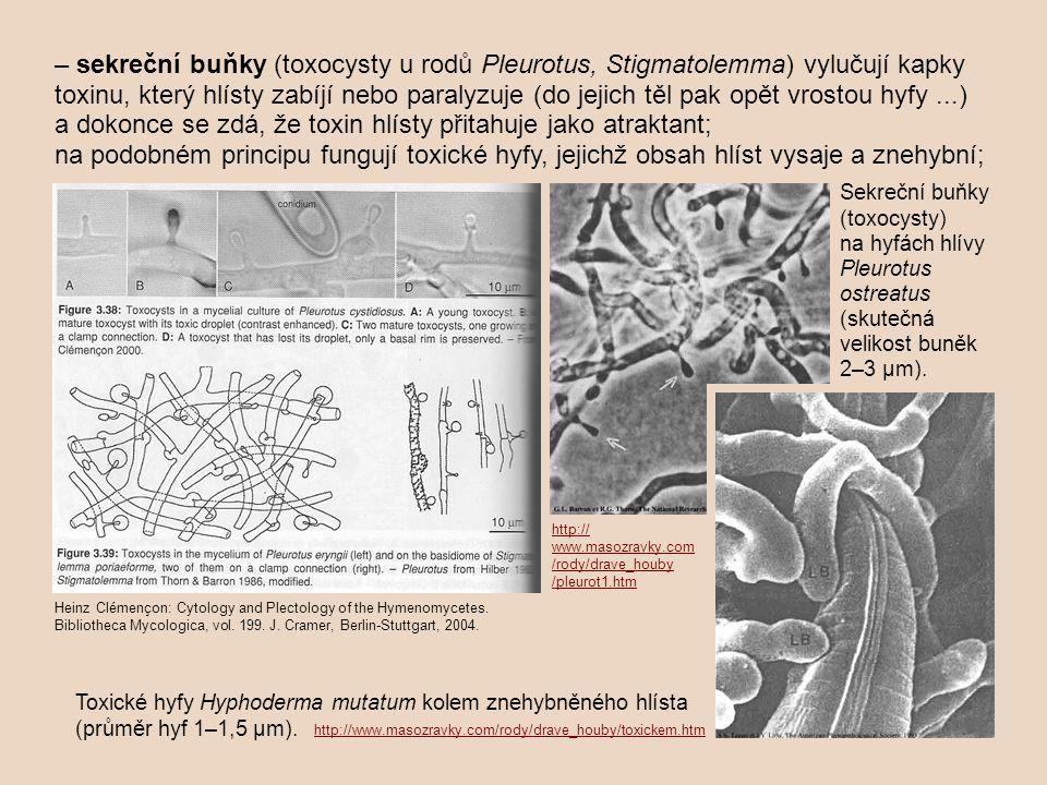 – sekreční buňky (toxocysty u rodů Pleurotus, Stigmatolemma) vylučují kapky toxinu, který hlísty zabíjí nebo paralyzuje (do jejich těl pak opět vrostou hyfy ...) a dokonce se zdá, že toxin hlísty přitahuje jako atraktant;