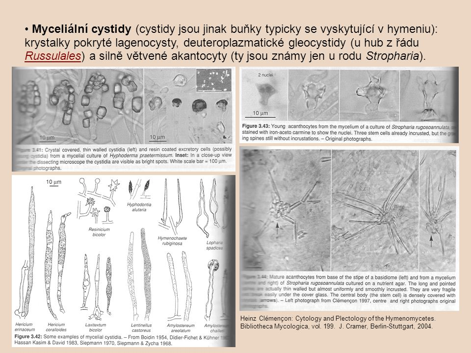 • Myceliální cystidy (cystidy jsou jinak buňky typicky se vyskytující v hymeniu): krystalky pokryté lagenocysty, deuteroplazmatické gleocystidy (u hub z řádu Russulales) a silně větvené akantocyty (ty jsou známy jen u rodu Stropharia).