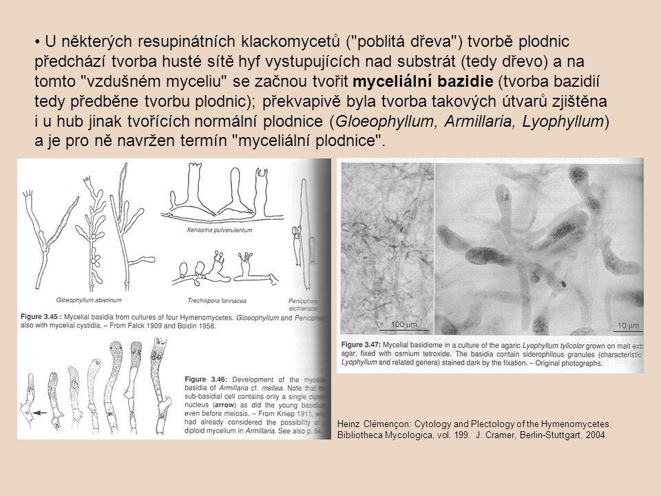 • U některých resupinátních klackomycetů ( poblitá dřeva ) tvorbě plodnic předchází tvorba husté sítě hyf vystupujících nad substrát (tedy dřevo) a na tomto vzdušném myceliu se začnou tvořit myceliální bazidie (tvorba bazidií tedy předběne tvorbu plodnic); překvapivě byla tvorba takových útvarů zjištěna i u hub jinak tvořících normální plodnice (Gloeophyllum, Armillaria, Lyophyllum) a je pro ně navržen termín myceliální plodnice .
