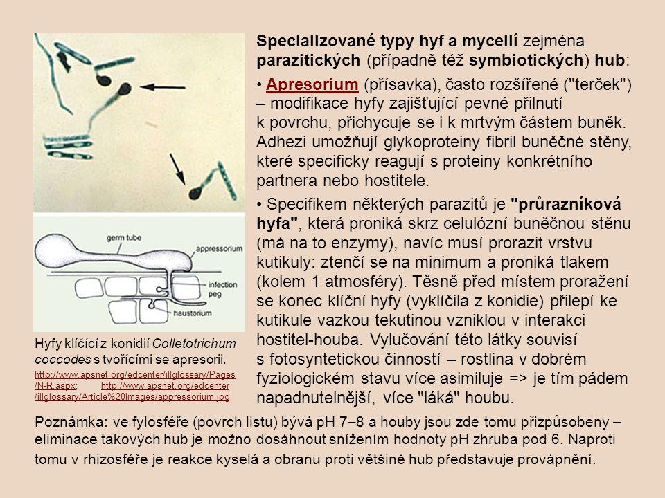 Specializované typy hyf a mycelií zejména parazitických (případně též symbiotických) hub: