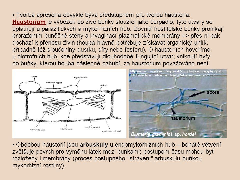 • Tvorba apresoria obvykle bývá předstupněm pro tvorbu haustoria.