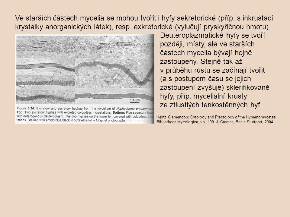Ve starších částech mycelia se mohou tvořit i hyfy sekretorické (příp