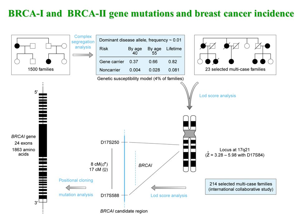 BRCA-I and BRCA-II gene mutations and breast cancer incidence