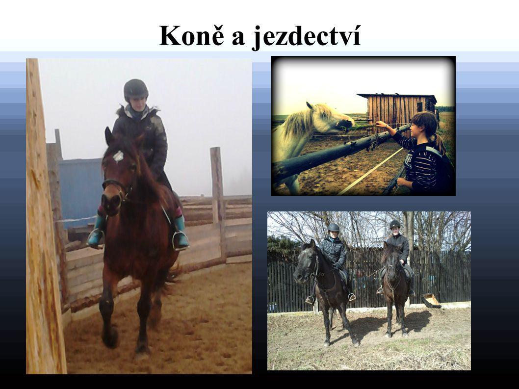 Koně a jezdectví