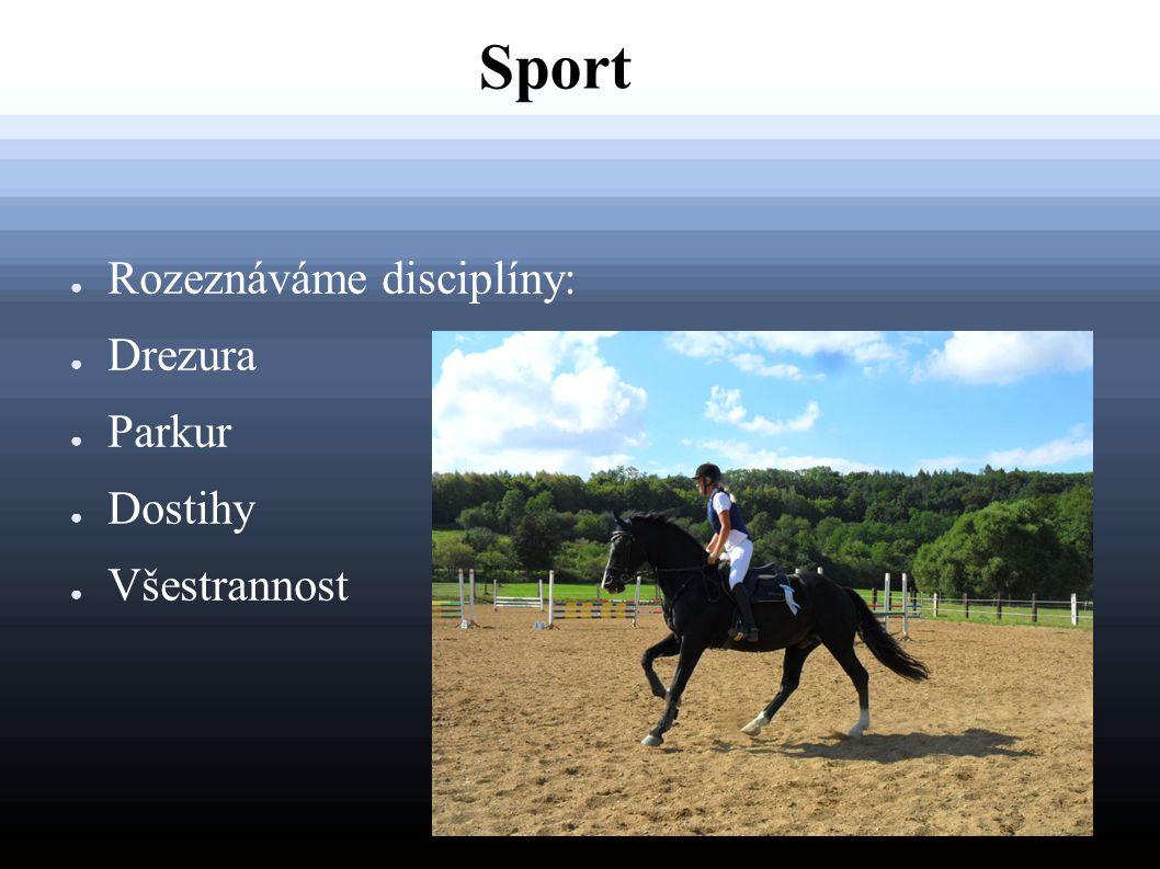 Sport Rozeznáváme disciplíny: Drezura Parkur Dostihy Všestrannost