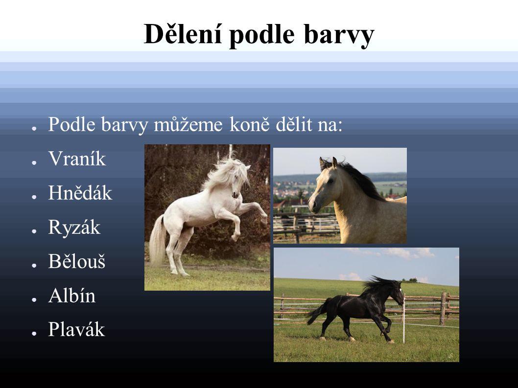 Dělení podle barvy Podle barvy můžeme koně dělit na: Vraník Hnědák
