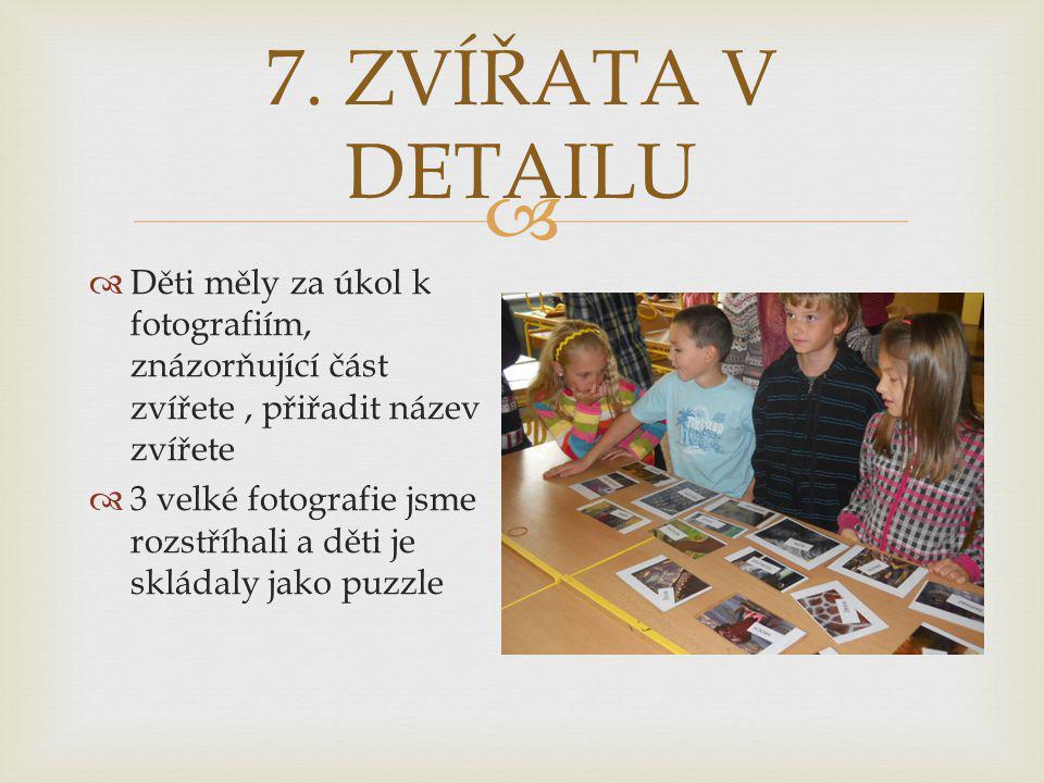 7. ZVÍŘATA V DETAILU Děti měly za úkol k fotografiím, znázorňující část zvířete , přiřadit název zvířete.
