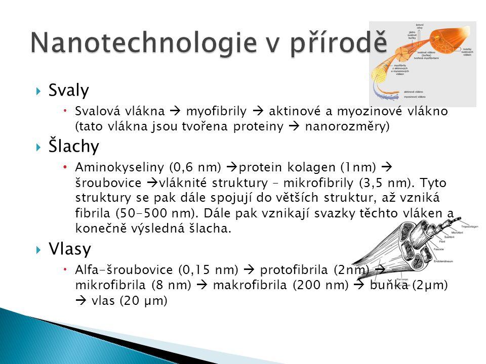 Nanotechnologie v přírodě