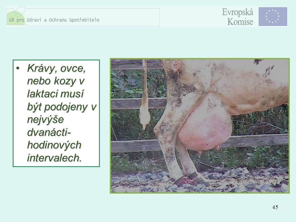 Krávy, ovce, nebo kozy v laktaci musí být podojeny v nejvýše dvanácti-hodinových intervalech.