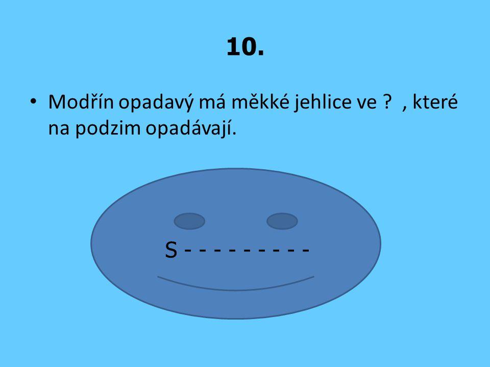 10. Modřín opadavý má měkké jehlice ve , které na podzim opadávají.