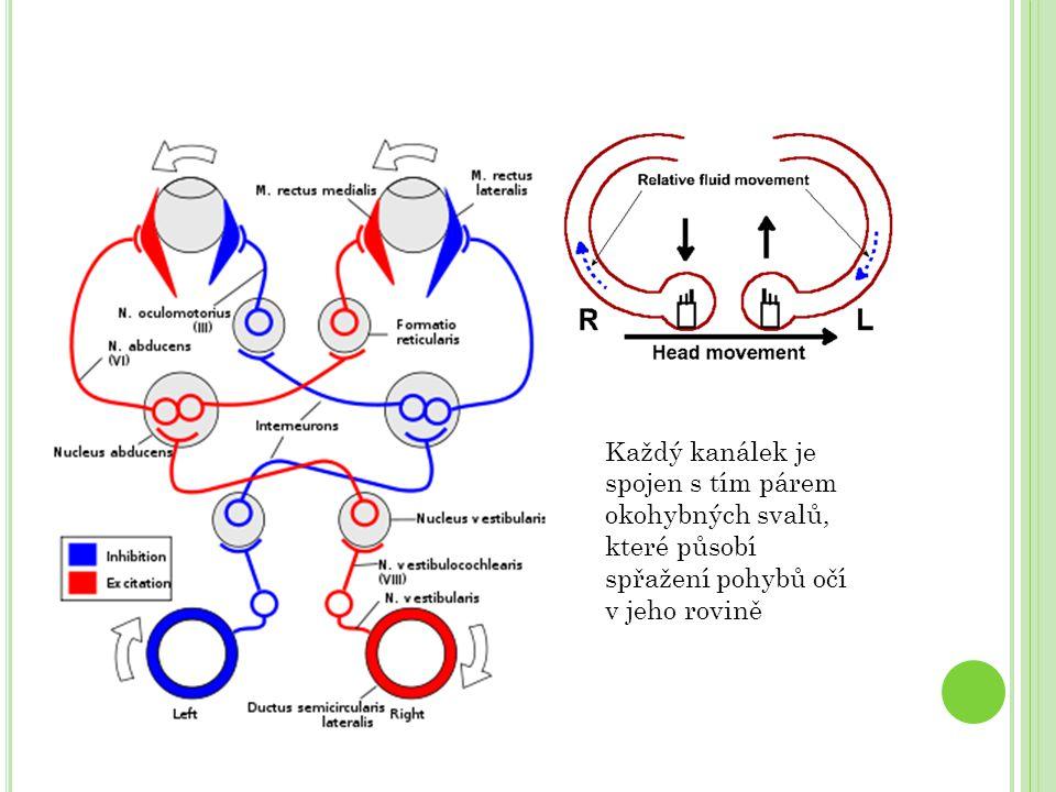 Každý kanálek je spojen s tím párem okohybných svalů, které působí spřažení pohybů očí v jeho rovině