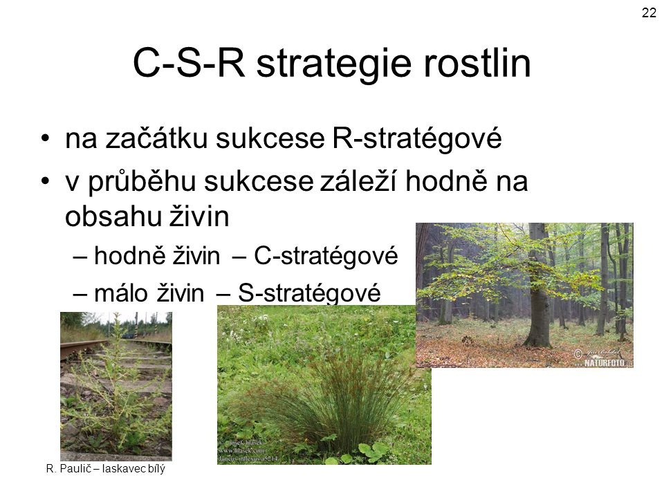 C-S-R strategie rostlin