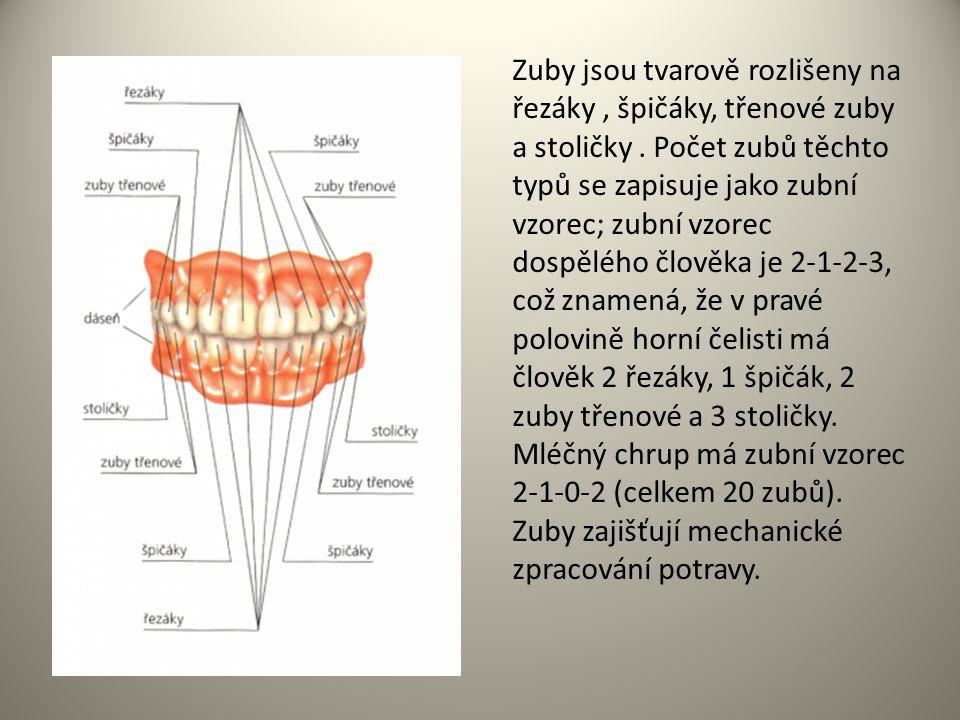 Zuby jsou tvarově rozlišeny na řezáky , špičáky, třenové zuby a stoličky . Počet zubů těchto typů se zapisuje jako zubní vzorec; zubní vzorec dospělého člověka je 2-1-2-3, což znamená, že v pravé polovině horní čelisti má člověk 2 řezáky, 1 špičák, 2 zuby třenové a 3 stoličky. Mléčný chrup má zubní vzorec 2-1-0-2 (celkem 20 zubů).