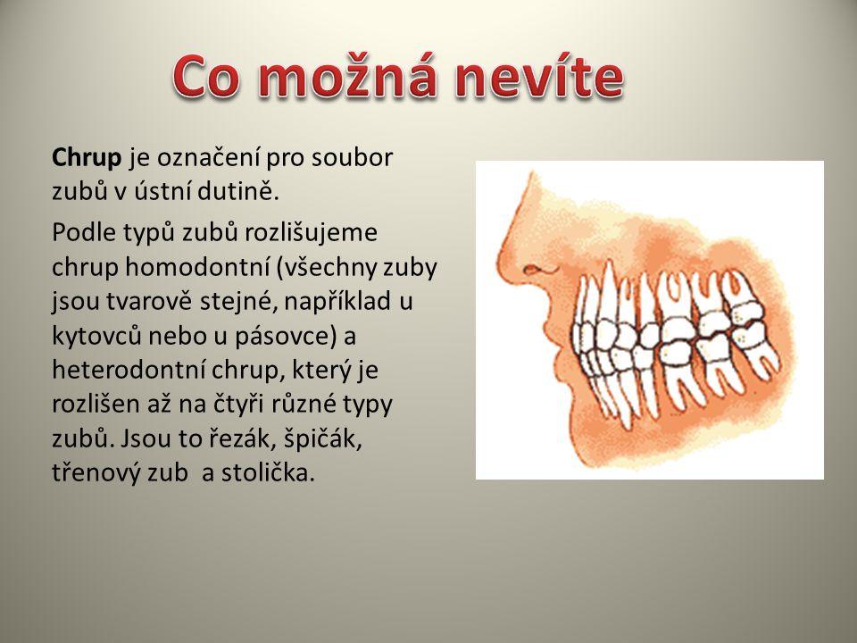 Co možná nevíte Chrup je označení pro soubor zubů v ústní dutině.