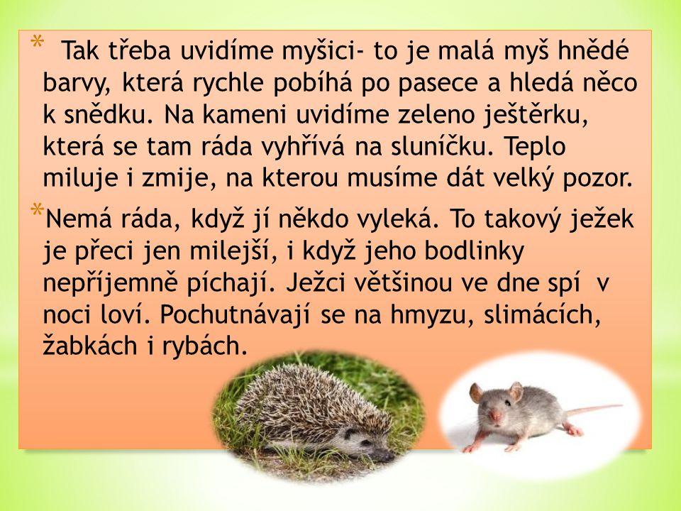 Tak třeba uvidíme myšici- to je malá myš hnědé barvy, která rychle pobíhá po pasece a hledá něco k snědku. Na kameni uvidíme zeleno ještěrku, která se tam ráda vyhřívá na sluníčku. Teplo miluje i zmije, na kterou musíme dát velký pozor.