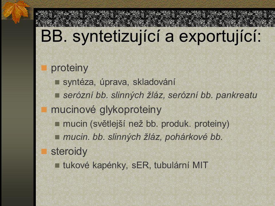 BB. syntetizující a exportující:
