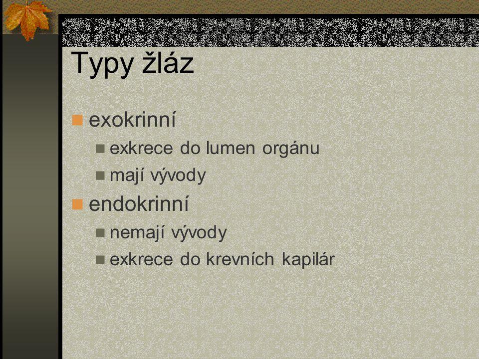 Typy žláz exokrinní endokrinní exkrece do lumen orgánu mají vývody