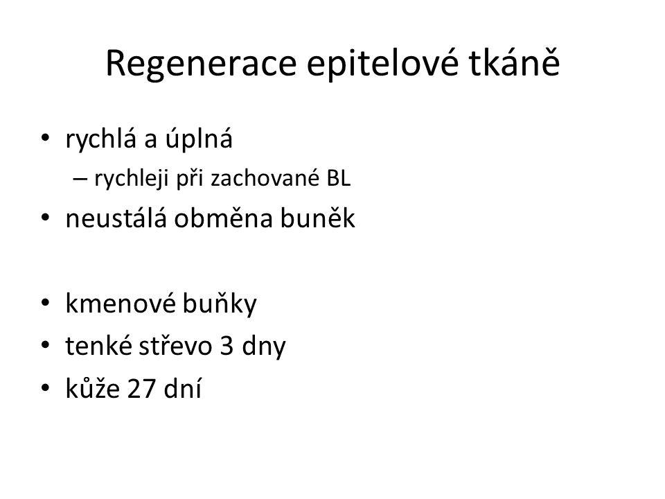 Regenerace epitelové tkáně