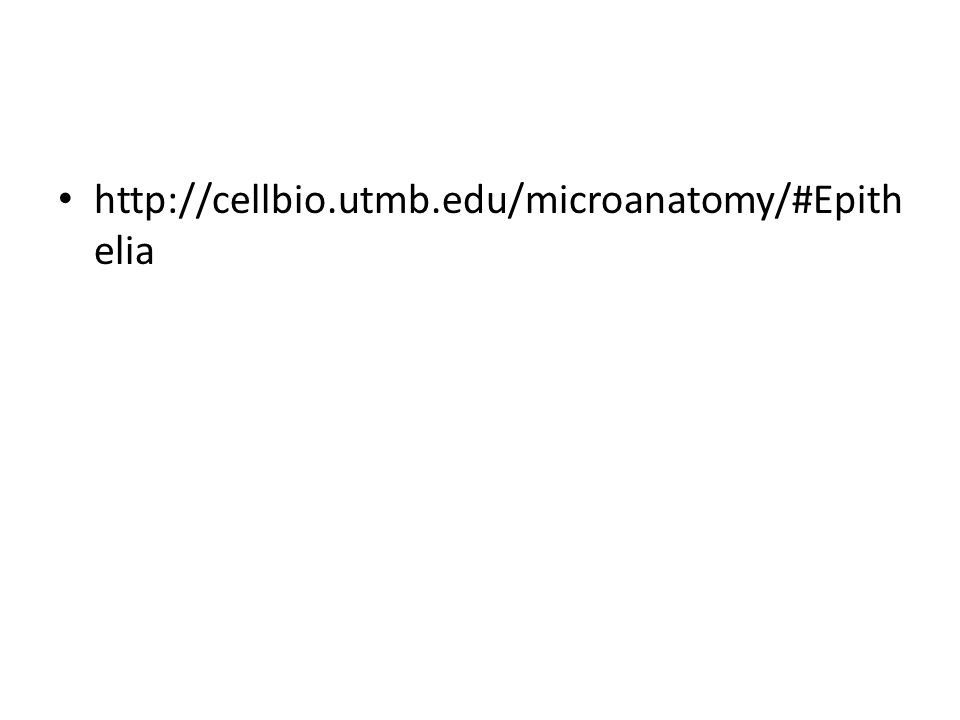 http://cellbio.utmb.edu/microanatomy/#Epithelia