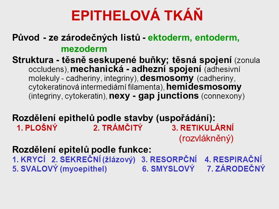 EPITHELOVÁ TKÁŇ Původ - ze zárodečných listů - ektoderm, entoderm,