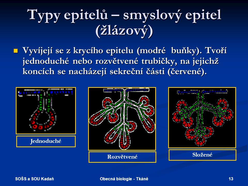 Typy epitelů – smyslový epitel (žlázový)