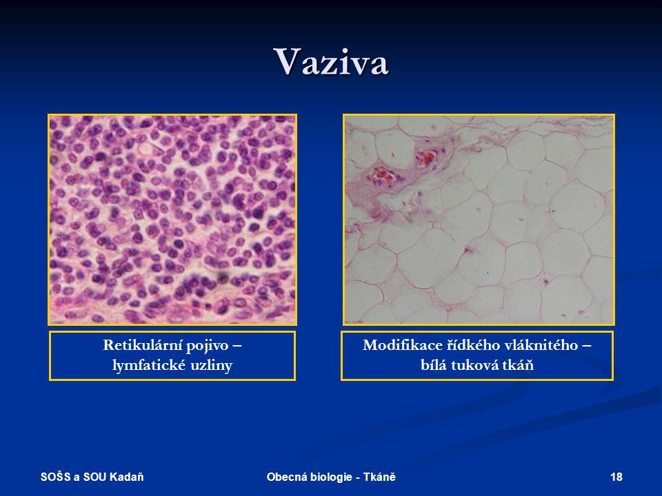 Modifikace řídkého vláknitého – Obecná biologie - Tkáně