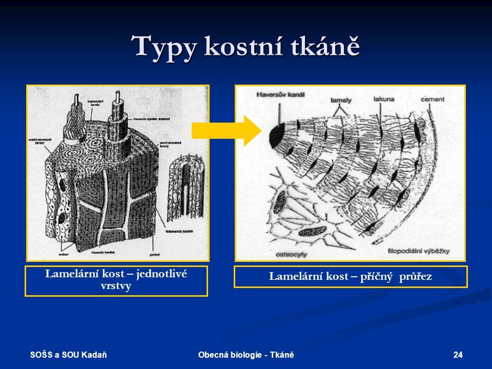 Typy kostní tkáně Lamelární kost – jednotlivé vrstvy