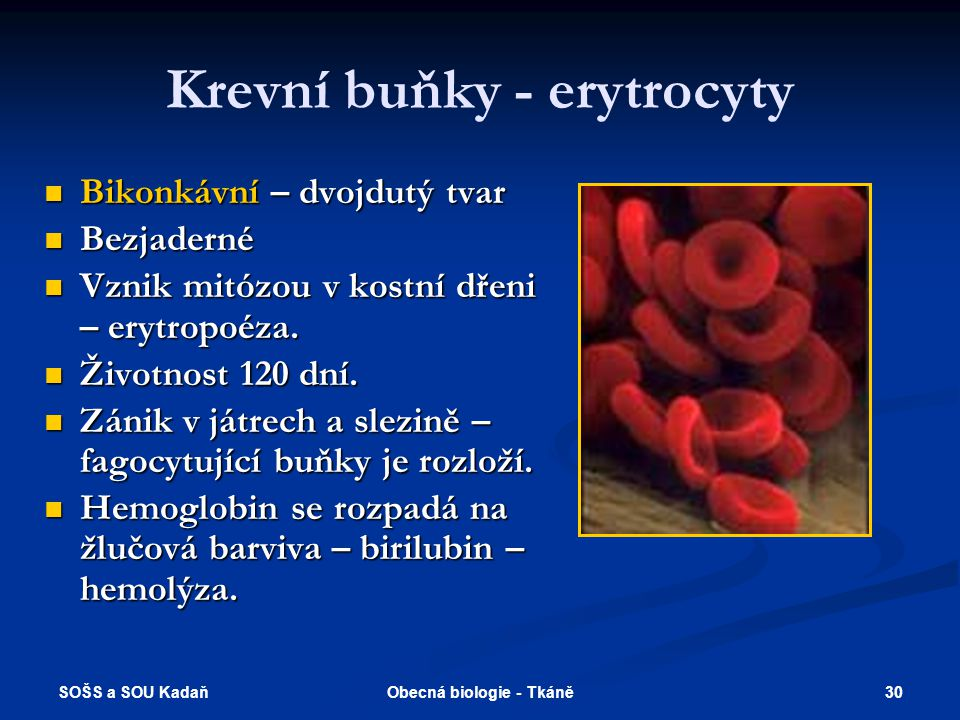 Krevní buňky - erytrocyty