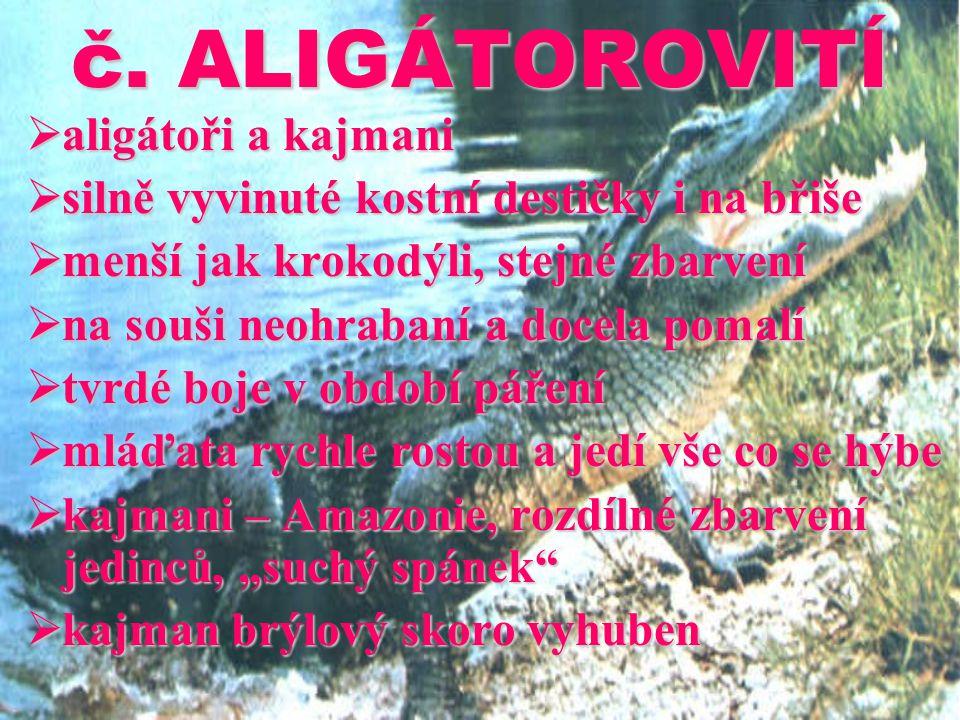 č. ALIGÁTOROVITÍ aligátoři a kajmani