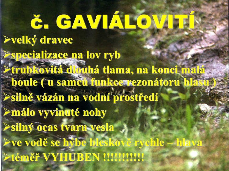č. GAVIÁLOVITÍ velký dravec specializace na lov ryb
