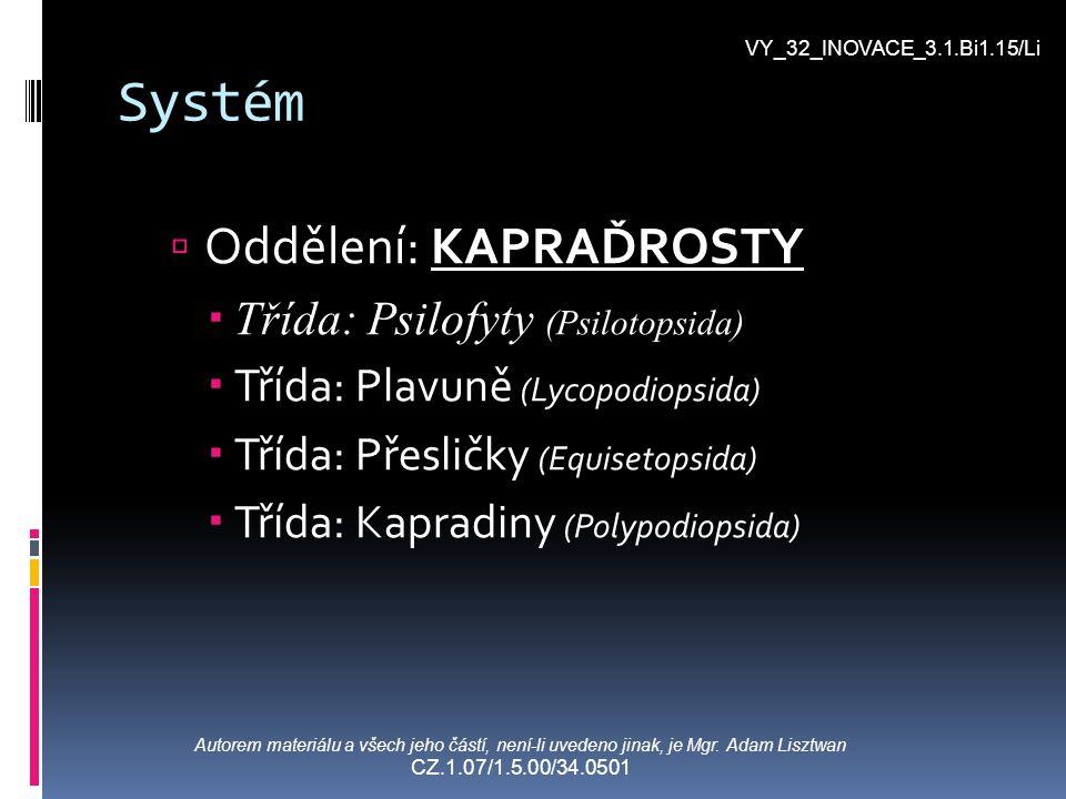 Systém Oddělení: KAPRAĎROSTY Třída: Psilofyty (Psilotopsida)