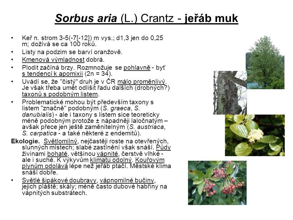 Sorbus aria (L.) Crantz - jeřáb muk