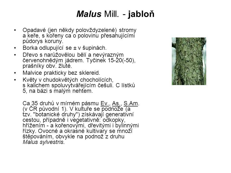 Malus Mill. - jabloň Opadavé (jen někdy polovždyzelené) stromy a keře, s kořeny ca o polovinu přesahujícími půdorys koruny.