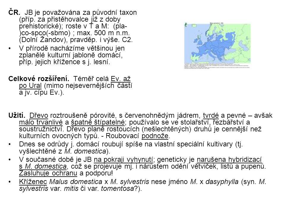 ČR. JB je považována za původní taxon (příp