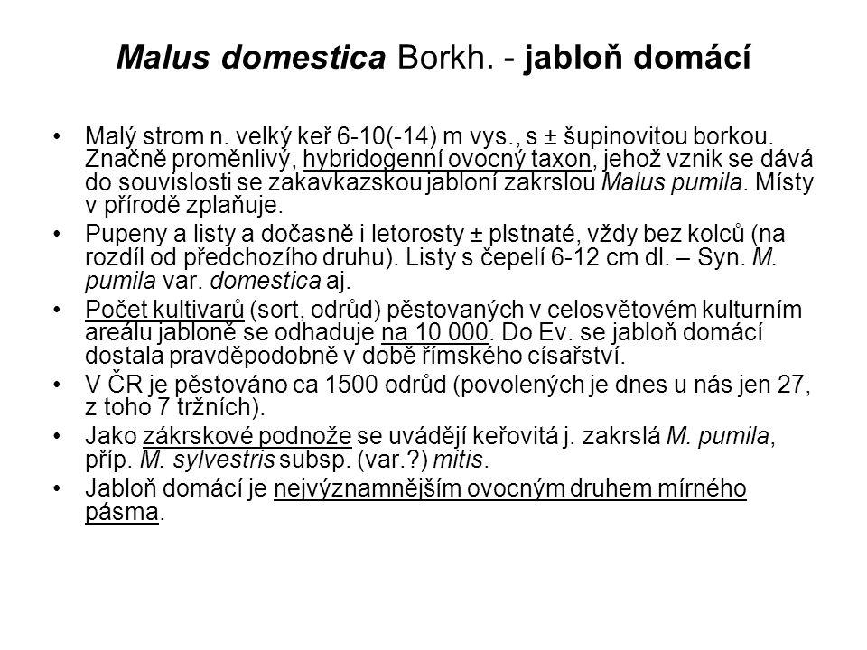 Malus domestica Borkh. - jabloň domácí