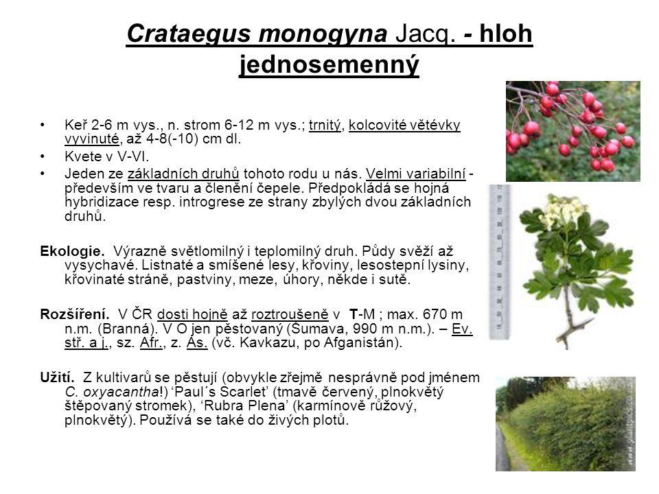 Crataegus monogyna Jacq. - hloh jednosemenný