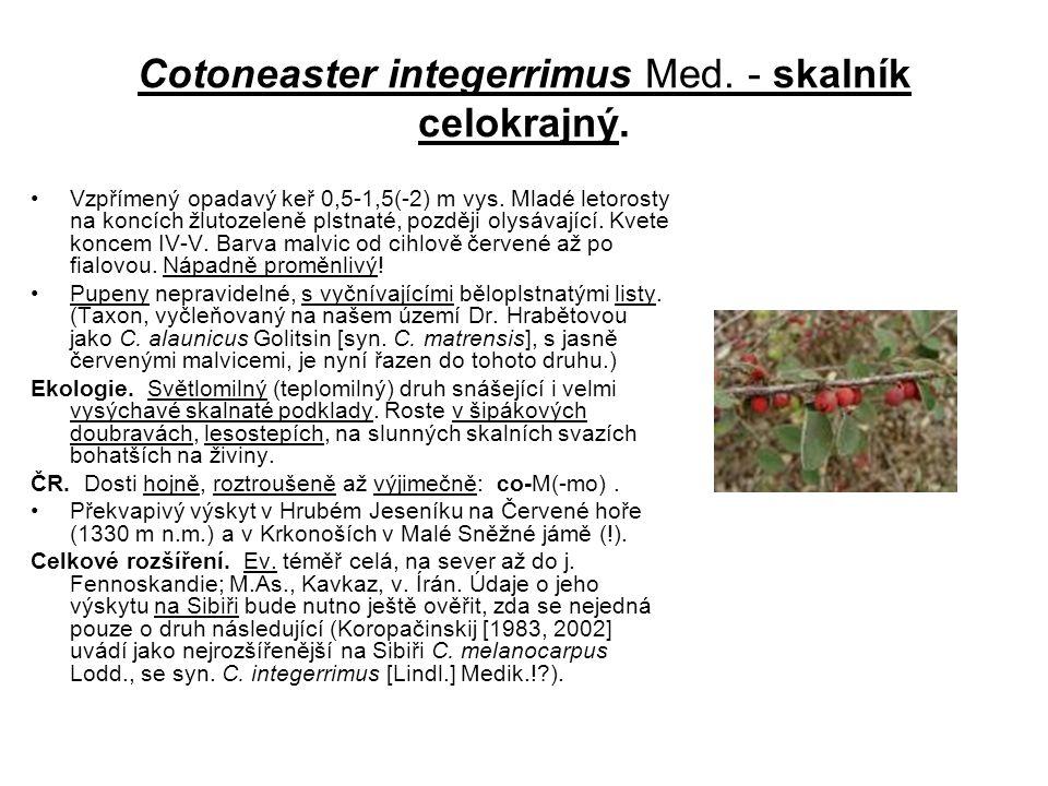 Cotoneaster integerrimus Med. - skalník celokrajný.