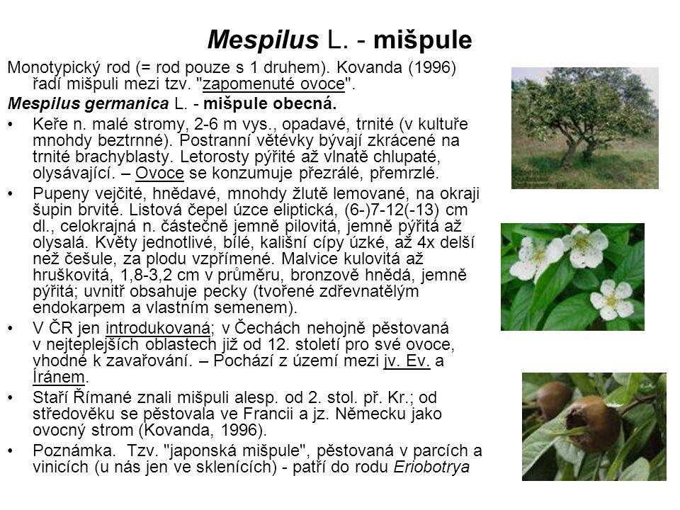 Mespilus L. - mišpule Monotypický rod (= rod pouze s 1 druhem). Kovanda (1996) řadí mišpuli mezi tzv. zapomenuté ovoce .