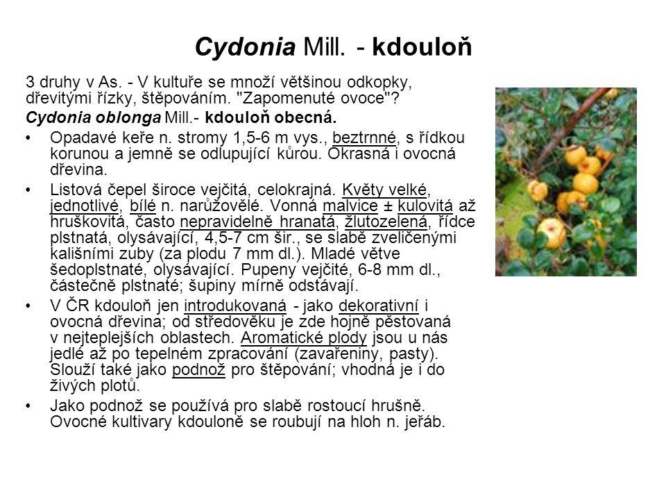 Cydonia Mill. - kdouloň 3 druhy v As. - V kultuře se množí většinou odkopky, dřevitými řízky, štěpováním. Zapomenuté ovoce