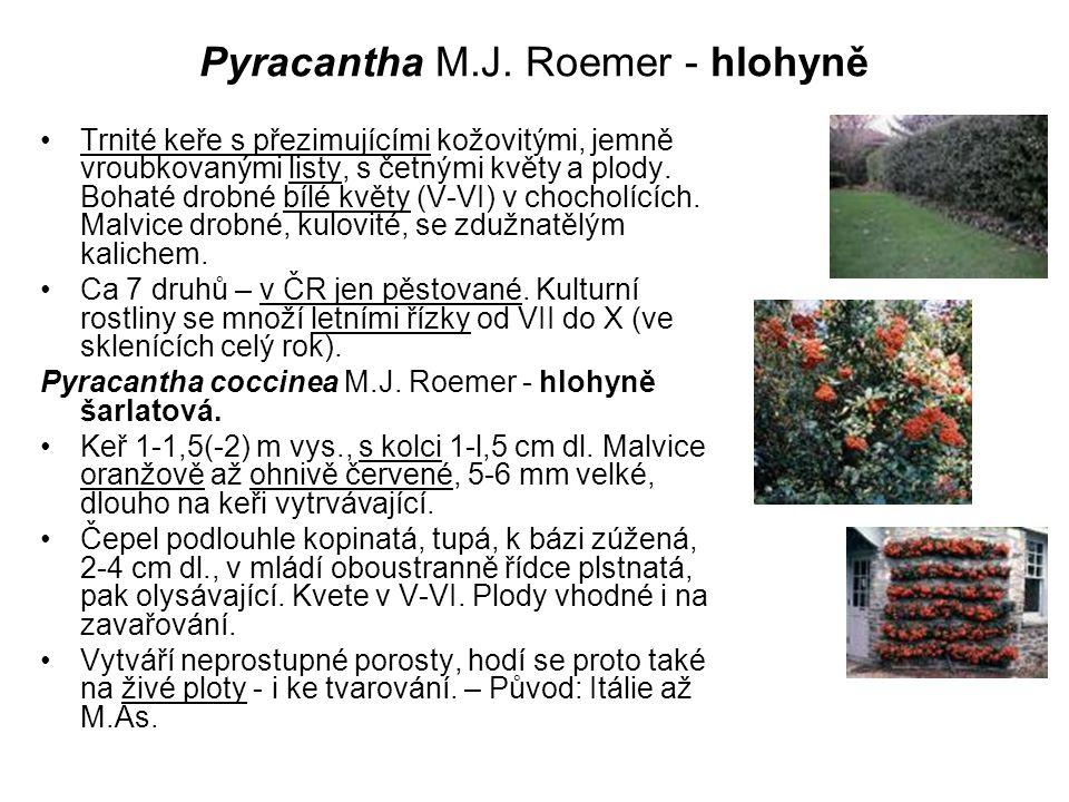 Pyracantha M.J. Roemer - hlohyně