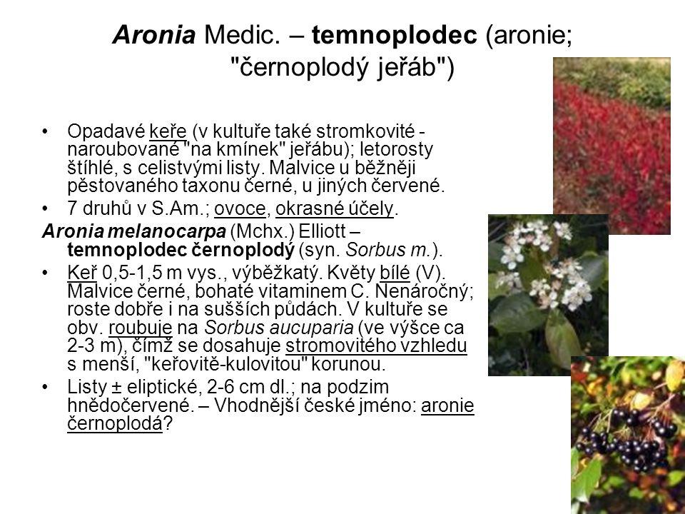 Aronia Medic. – temnoplodec (aronie; černoplodý jeřáb )