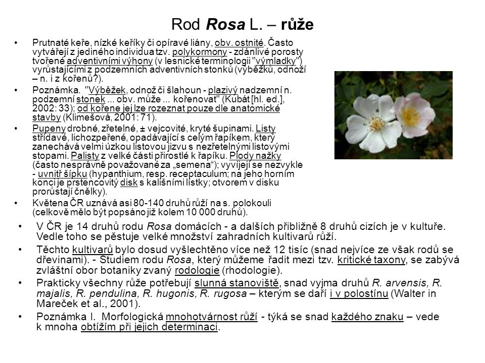 Rod Rosa L. – růže